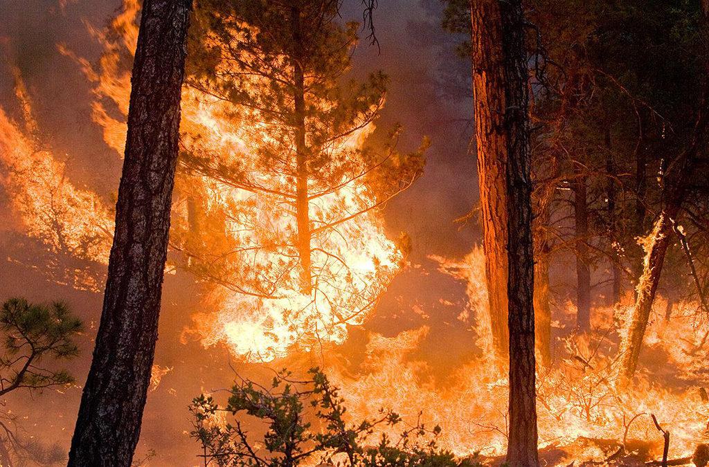 الروس يطالبون بإخماد حرائق الغابات المشتعلة في صربيا