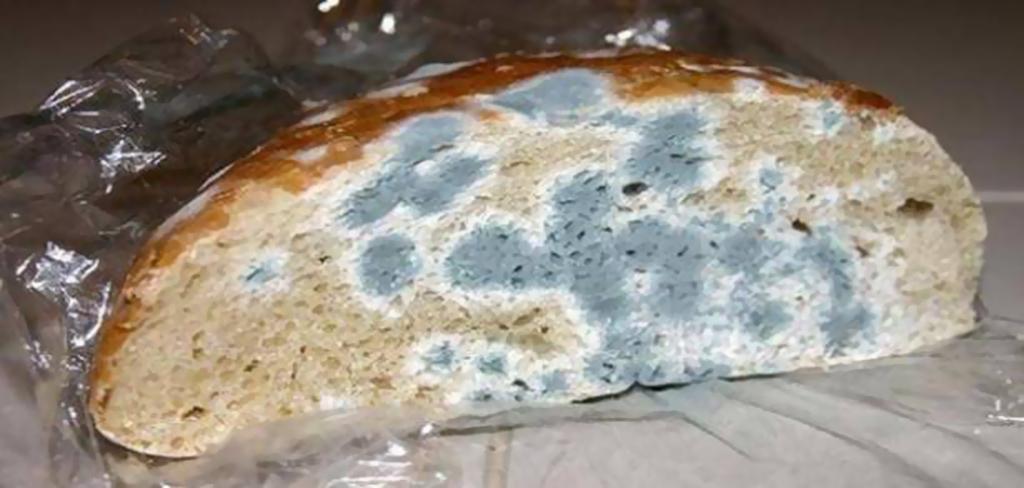 احذروا من خطورة الخبز المتعفن !!